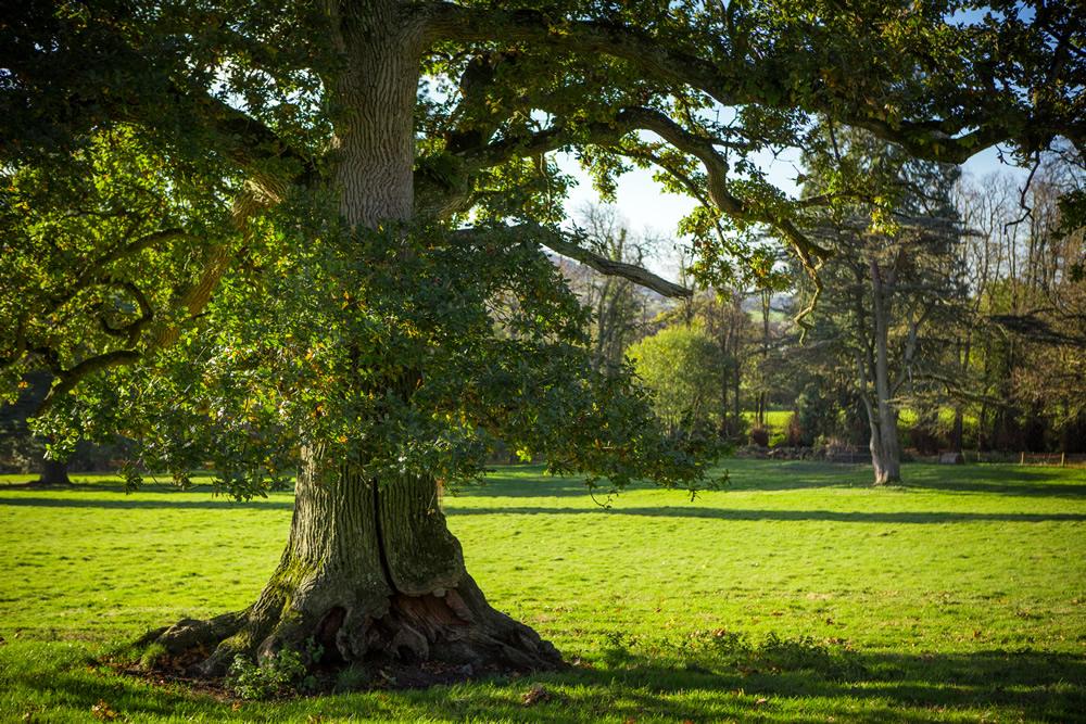 161107-TE-Trees-and-Working-009-IMGL9140