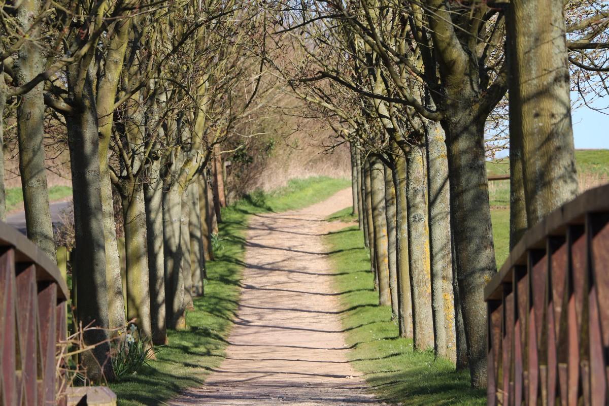 magnolia_park_tree_lined_bridge_300dpi